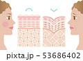 健康肌 しわ肌 肌の構造と外国人女性 53686402