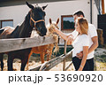 Beautiful couple spend time with a horses 53690920
