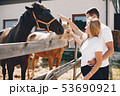 Beautiful couple spend time with a horses 53690921