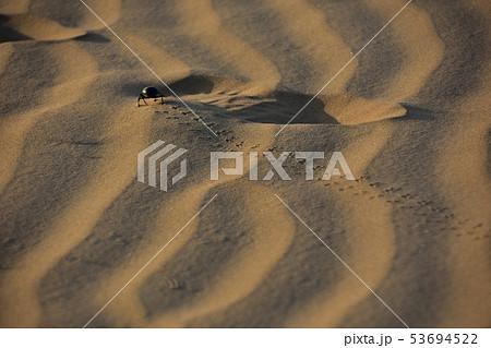 インドのジャイサルメールのクーリー村 砂丘を歩く昆虫のフンコロガシ 53694522