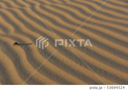 インドのジャイサルメールのクーリー村 砂丘を歩く昆虫のフンコロガシ 53694524