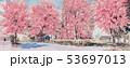 花 さくら サクラのイラスト 53697013