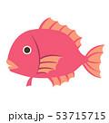鯛 魚類 縁起物のイラスト 53715715
