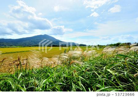 9月茨城県つくば市にてお昼時強風で揺れるススキと筑波山 53723666