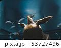 カメ 動物 アクアリウムの写真 53727496