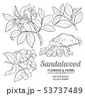 sandalwood vector set 53737489