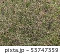 草 草床 素材 芝生 写真 テクスチャ 53747359