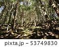 陽射し差し込む樹林 53749830