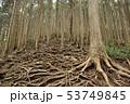 根の森 53749845