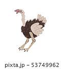 Ostrich Wild Exotic African Bird Vector Illustration 53749962