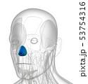 3d rendering of dilator naris 53754316