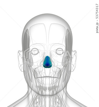 3d rendering of dilator naris 53754317