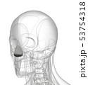 3d rendering of dilator naris 53754318