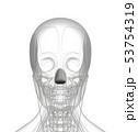 3d rendering of dilator naris 53754319