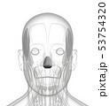 3d rendering of dilator naris 53754320