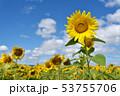 青空とひまわり(北海道・智恵文) 53755706