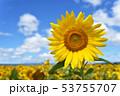青空とひまわり(北海道・智恵文) 53755707