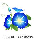 朝顔 夏 花のイラスト 53756249
