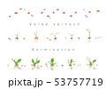 サラダほうれん草の発芽イラスト02 53757719