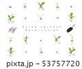 サラダほうれん草の発芽イラスト03 53757720