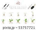 サラダほうれん草の発芽イラスト04 53757721