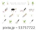 サラダほうれん草の発芽イラスト05 53757722