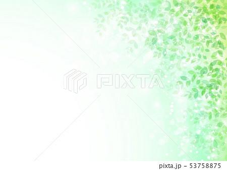 新緑イメージ背景初夏 53758875