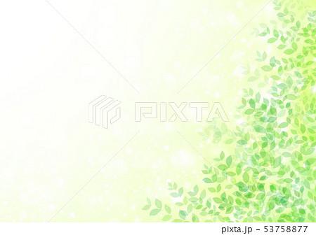 新緑イメージ背景初夏 53758877