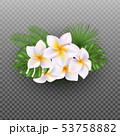Vector realistic tropical flowers and leaves. Plumeria 53758882