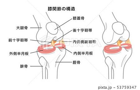 関節 根 橈骨 手