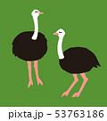 鳥 だちょう ダチョウ 駝鳥 イラスト 53763186