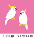 鳥 インコ オウム イラスト 53763346