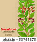 sandalwood vector background 53765875