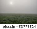 畑 緑 緑色の写真 53776524