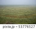 畑 草 緑の写真 53776527