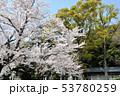 神明社 満開 桜の写真 53780259