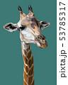 Illustration polygonal vector 3d art of giraffe. 53785317