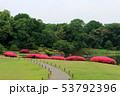 六義園のサツキの花(6月)東京都文京区 53792396
