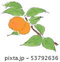 杏 果実 成るのイラスト 53792636