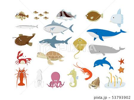 海の生き物たち 53793902