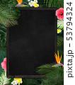 背景-夏-熱帯-トロピカル-フレーム-ブラックボード 53794324