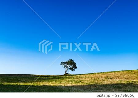宮城 ダイドコロにある草原の丘の上の木 53796656