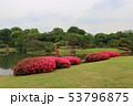 六義園のサツキの花(6月)東京都文京区 53796875