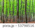 新緑のブナの森 53798516