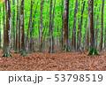 ブナが立ち並ぶ新緑の森 53798519