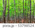 美しい新緑の森 53798524