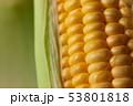 Close up shot Fresh ripe and peeled sweet corn 53801818