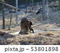 チンパンジー3 53801898