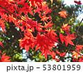紅葉1 53801959