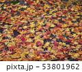 紅葉3 53801962